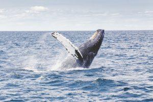 クジラ101
