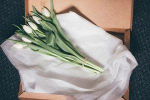 白い花101